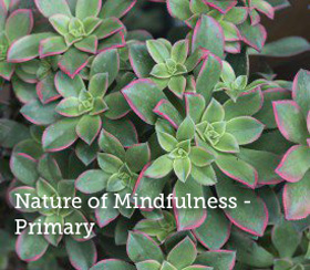 Nature-of-mindfulness-primary