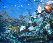 Great Pacific Garbage Patch puts fish on 'plastic diet'