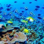 Challenges and Solutions for The Great Barrier Reef