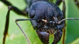 Insects can teach us how to create better tec...