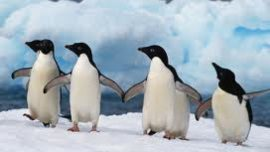 Fun facts about penguins!...