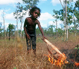 Using Fire To Manage Country – Upper Primary