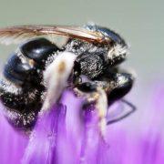 Aussie beekeeper entrepreneurs set record...