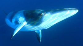 Australia takes Japan to court on whaling –...