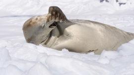 Sea Ice - What's the fuss?...