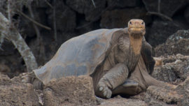 Extinction: just how bad is it and why should...