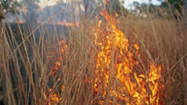 Fighting fire with fire: Botswana adopts Indi...