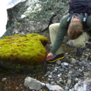 Antarctic moss a charming but chilling sign of warming
