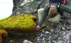 Antarctic moss a charming but chilling sign o...