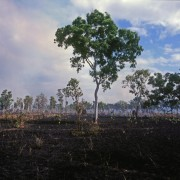 Savanna burns reduce emissions by half a million tonnes