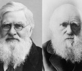 Darwin versus Wallace – Year 10