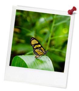 butterfly-green-hero