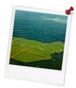 plantation4