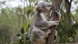 Four unusual Australian animals to spot in yo...