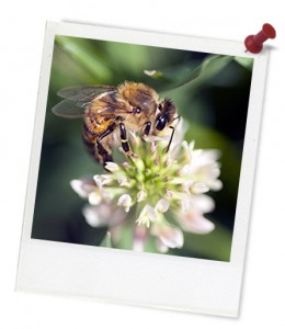 Bee on Blossom Hero Frame