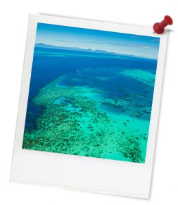blue_coral-reef_lotr_0080_photoframe