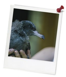 blue_young_bird_in_hands_untitled_1-534-3_photoframe