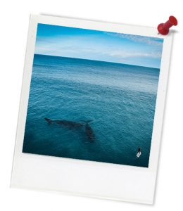 blue_ocean_untitled_1-676-1_photoframe