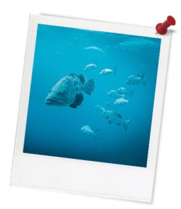 blue_fish-swimming_untitled_1-583-1_photoframe