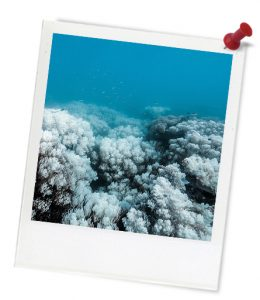 blue_coral-bleaching_untitled_1-627_photoframe-1