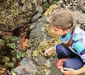 Student Rangers: Rockpool Ramble – Years 4 to 6