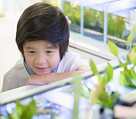 STEAM – Aquaponics for Sustainable Living – Years 3 and 4