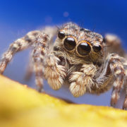 Curious Kids: why do spiders need so...