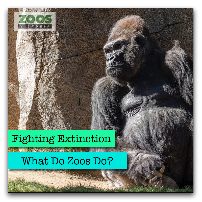 What do zoos do?