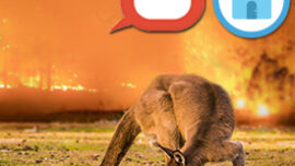 Animal response to a bushfire is astounding. ...