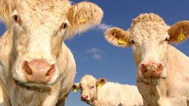 Australia's farmers want more climate actio...