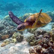 Australian Marine Conservation Society...