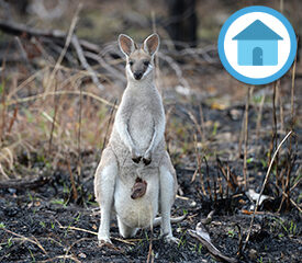 Learn@Home – How Do Animals Live With Bushfires?