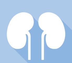 SugarByHalf – Meet Your Kidneys – HPE – Years 5 & 6